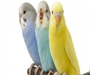 طيور الشرقية
